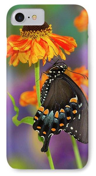 Spicebush Swallowtail Butterfly IPhone Case by Darrell Gulin