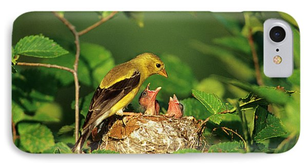American Goldfinch (carduelis Tristis IPhone Case by Richard and Susan Day