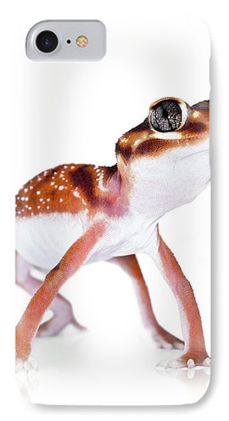 Australian Reptiles On White IPhone Case by Shannon Benson