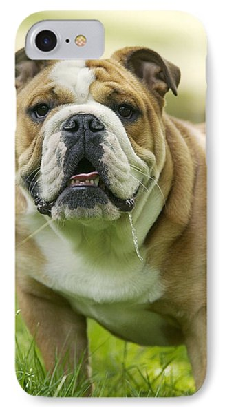 English Bulldog IPhone Case by Jean-Michel Labat
