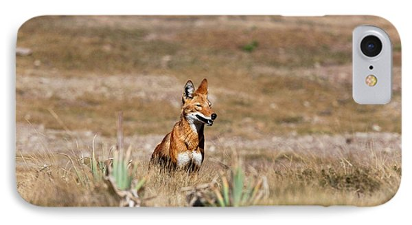 Ethiopian Wolf (canis Simensis IPhone Case by Martin Zwick