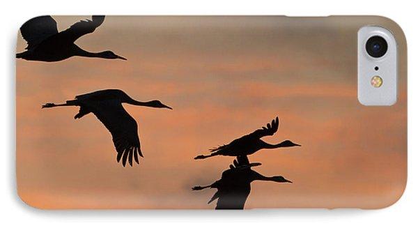 Sandhill Cranes (grus Canadensis IPhone Case by William Sutton