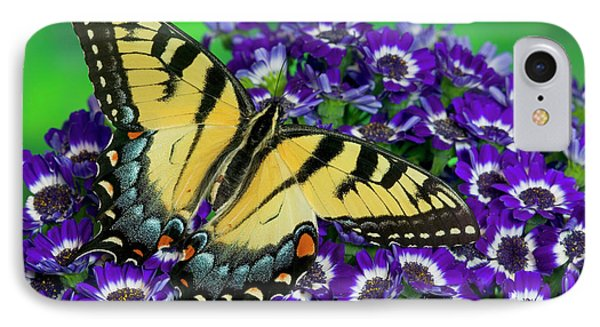 Eastern Tiger Swallowtail Papilio IPhone Case