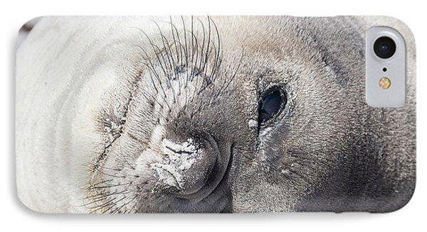 Southern Elephant Seal (mirounga Leonina IPhone Case by Martin Zwick