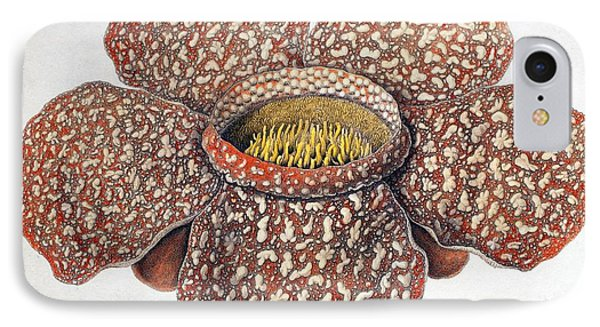 1820 First Description Rafflesia Flower IPhone Case by Paul D Stewart