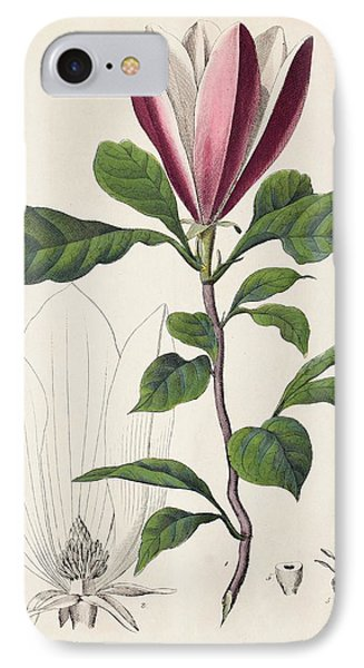 1847 Magnolia Primitive Flower Bracts IPhone Case by Paul D Stewart
