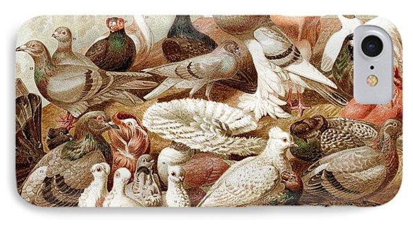1870 Domestic Fancy Pigeon Breeds Darwin IPhone 7 Case by Paul D Stewart