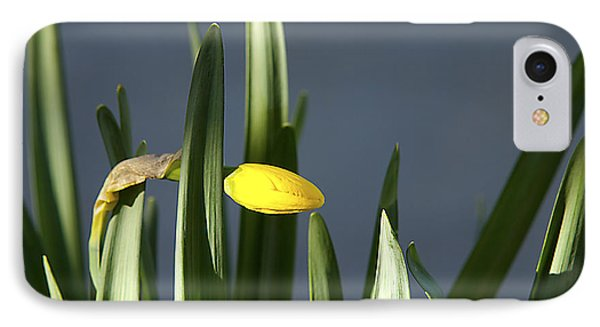 1st Daff IPhone Case by Joe Schofield