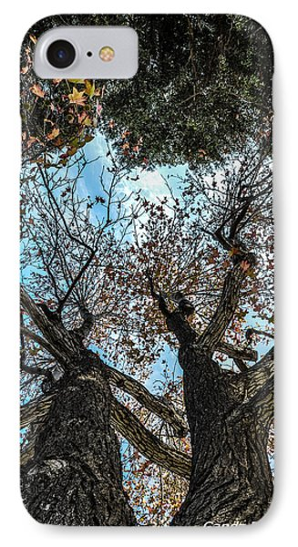 1st Tree IPhone Case by Gandz Photography