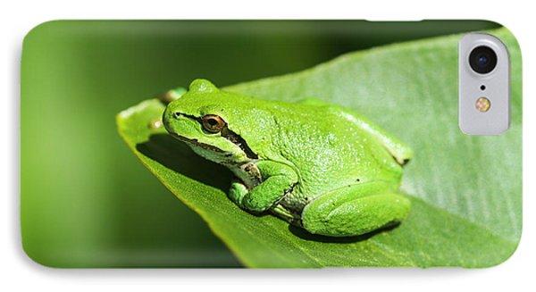 A Pacific Tree Frog  Pseudacris Regilla IPhone Case by Robert L. Potts