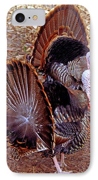 Adult Male Wild Turkeys IPhone Case