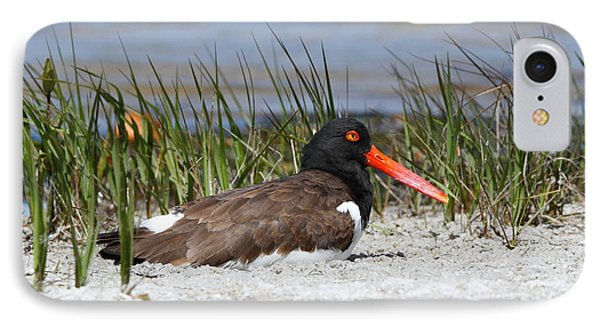 IPhone Case featuring the photograph American Oystercatcher by Jennifer Zelik