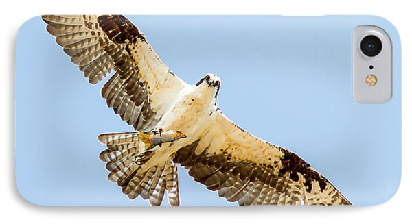 An Osprey Feeding On A Trout IPhone Case by Brian Williamson