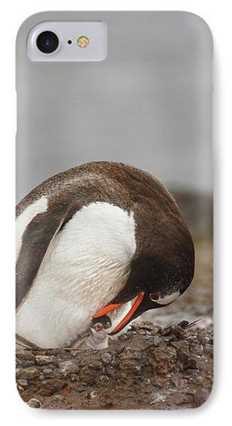 Antarctica, Aitcho Island IPhone Case by Jaynes Gallery