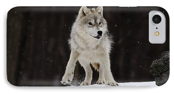 IPhone Case featuring the photograph Arctic Wolf by Wolves Only
