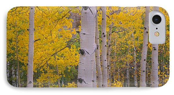 Aspen Trees In A Forest, Telluride, San IPhone Case