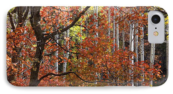 Autumn Colors IPhone Case by Sue Cullumber