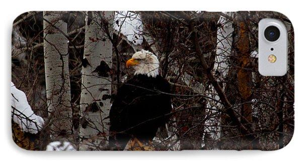 Bald Eagle Phone Case by Omaste Witkowski