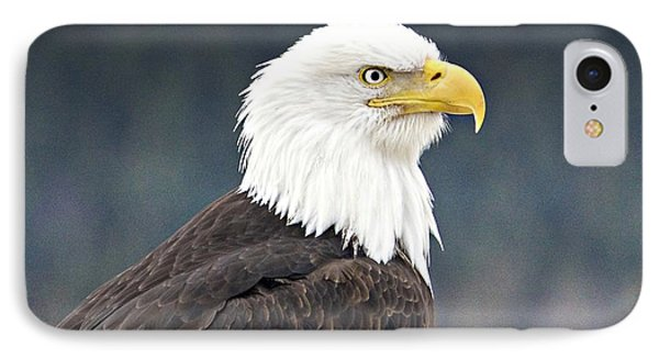 Bald Eagle IPhone Case by Sylvia Hart