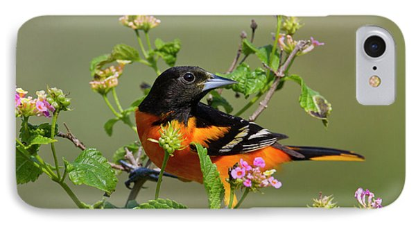 Oriole iPhone 7 Case - Baltimore Oriole (icterus Galbula by Larry Ditto