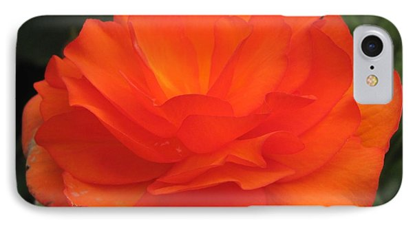 IPhone Case featuring the photograph Begonia Named Nonstop Apricot by J McCombie