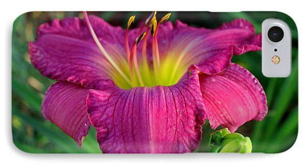 IPhone Case featuring the photograph Bela Lugosi Daylily by Suzanne Stout