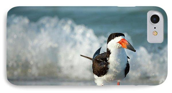 Black Skimmer Bathing Along Shoreline IPhone Case