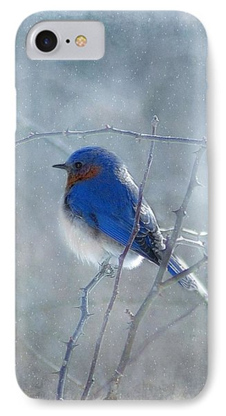 Blue Bird  IPhone Case by Fran J Scott