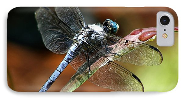 IPhone Case featuring the photograph Blue Dragonfly by Kelly Nowak