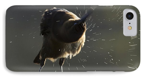 Boat Tailed Grackle IPhone Case by Meg Rousher