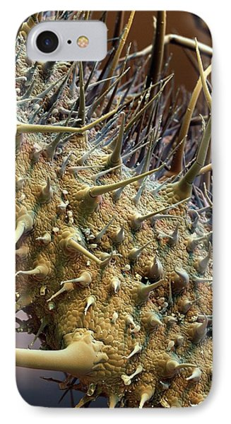 Borage Trichomes IPhone Case by Stefan Diller