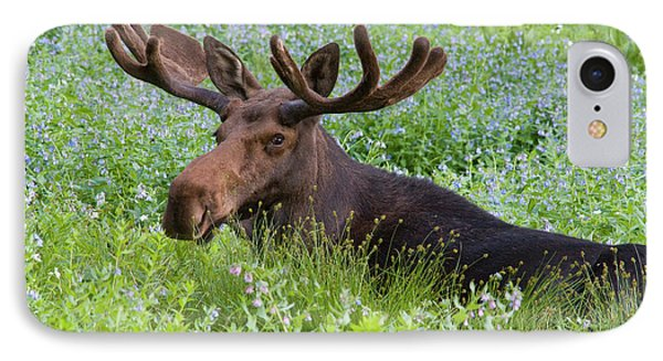 Bull Moose (alces Alces IPhone Case by Howie Garber