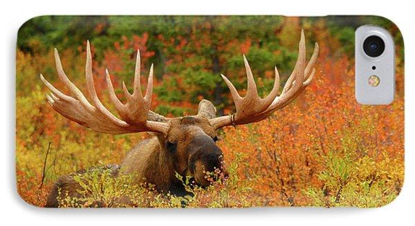 Bull Moose Feeding, Denali National IPhone Case by Michel Hersen