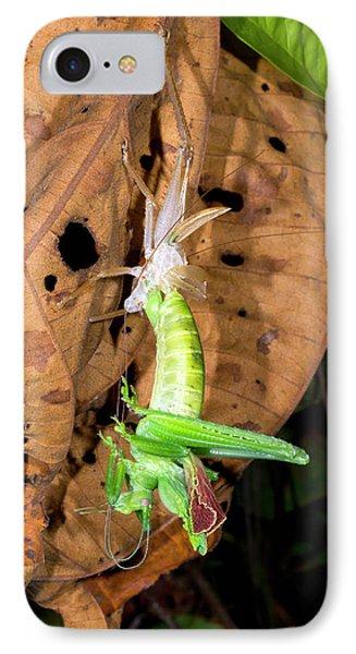 Bush Cricket Shedding Its Skin IPhone Case