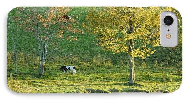 Calf On A Farm Fall Maine IPhone Case by Keith Webber Jr