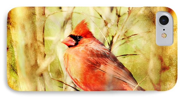 IPhone Case featuring the photograph Cardinal by Trina  Ansel