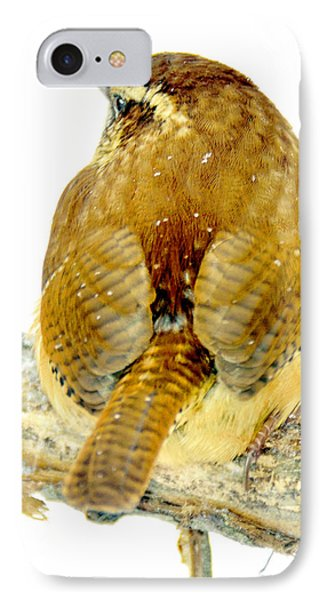 Carolina Wren In Winter IPhone Case by A Gurmankin