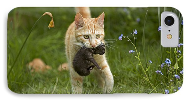 Cat Carrying Kitten IPhone Case by Jean-Michel Labat