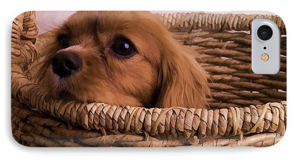 Cavalier King Charles Spaniel Puppy In Basket IPhone Case by Edward Fielding