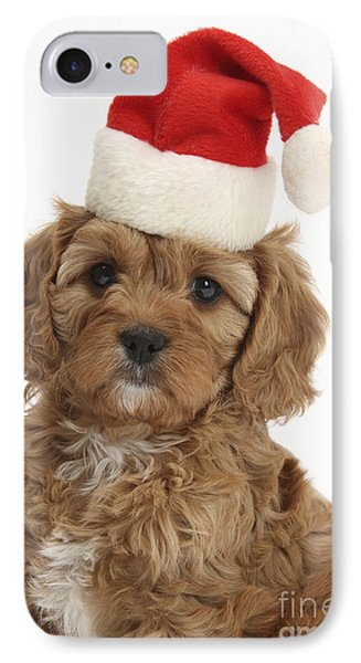 Cavapoo Puppy In Christmas Hat IPhone Case by Mark Taylor
