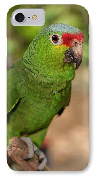 Central America, Honduras, Roatan IPhone Case by Jim Engelbrecht