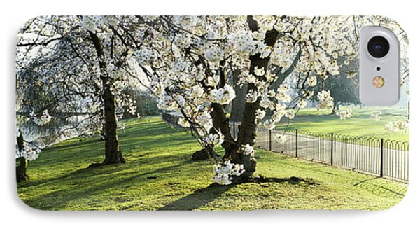 Cherry Blossom In St. Jamess Park, City IPhone Case by Panoramic Images