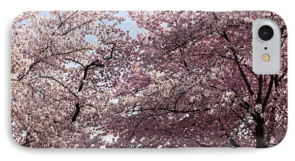 Cherry Blossom Trees In Bloom IPhone Case by Panoramic Images