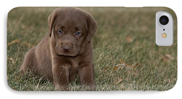 Chocolate Labrador Puppy Phone Case by Linda Freshwaters Arndt