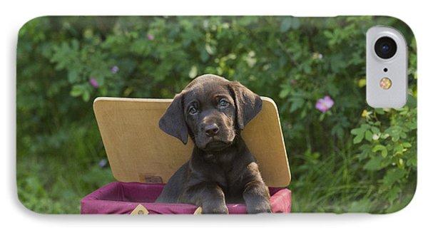 Chocolate Labrador Retriever IPhone Case by Linda Freshwaters Arndt