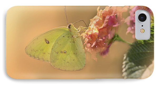 Clouded Sulphur Butterfly IPhone Case by Betty LaRue