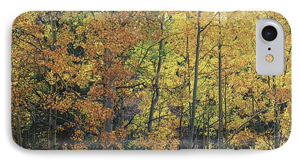 Colorful Changing Aspens - Divide Colorado IPhone Case by Brian Harig
