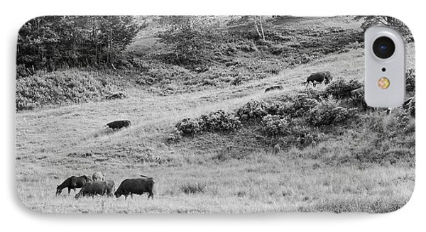 Cows Grazing In Field Rockport Maine IPhone Case by Keith Webber Jr
