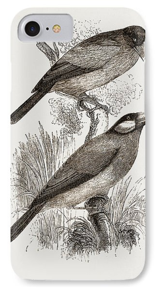 Crossbills IPhone Case by Litz Collection