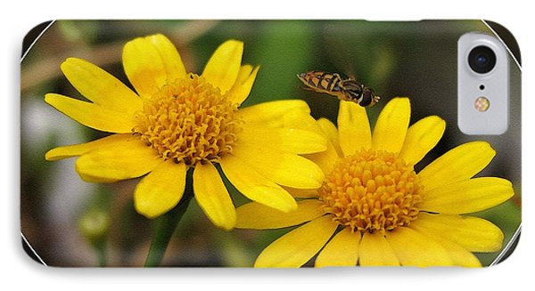 Dahlberg Daisy Named Gold Carpet IPhone Case by J McCombie
